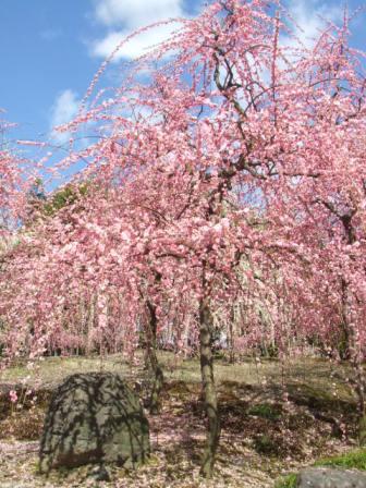 梅咲き乱れる城南宮…桃源郷のようでした
